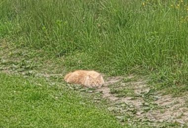 Zgodba o dveh oranžnih mačkah