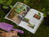 Spustite zelišča in naravo v svoje srce